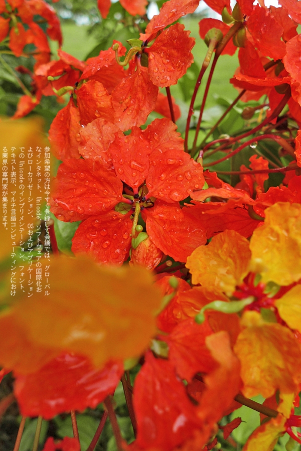http://yutakis.files.wordpress.com/2010/05/ytk-p8-bad.jpg?w=600&h=899
