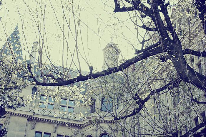 PARIS (115)