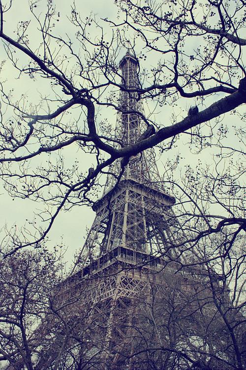 PARIS (186)