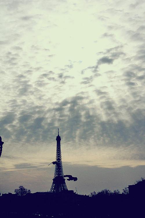 PARIS (205)